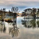 Flooded Landscape by niklens