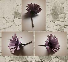 Vintage Daisy by Leah Highland