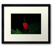 Lonely Hibiscus Framed Print