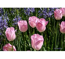 Tulips ~ Dancing in the Sunlight Photographic Print