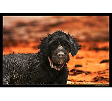 Beach Dog Photographic Print