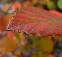 autumn leaf against bokeh by mimbravastudio