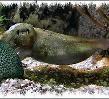 Cuttlefish by Rachael Taylor