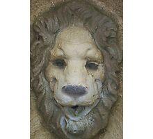 Lionhead Photographic Print