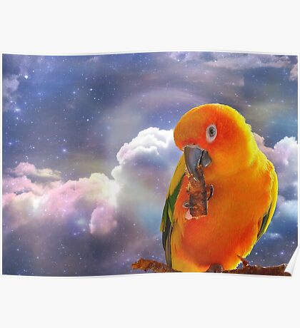 I'm Your Sunshine On A Cloudy Day...-Sun Conure - NZ Poster