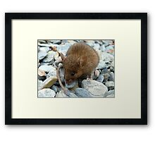 I Don't Want To Be Trout Food!!! - Mouse - NZ Framed Print