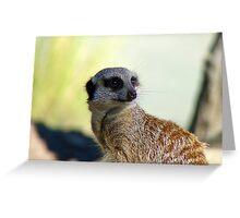 Am I A Mere Cat? I Don't Think So!  - Meerkat - Orana Park - Christchurch  Greeting Card