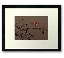 Bushfire Sunset Framed Print