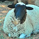 Baa Baa Black Sheep ( Almost ) by Penny Smith