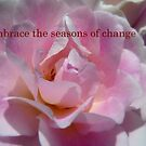 Embrace The Seasons Of Change - Rose - NZ by AndreaEL