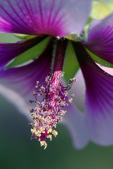 Details of Nature by ~ Fir Mamat ~
