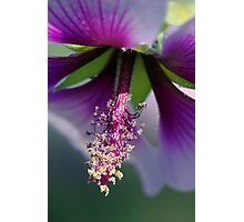 Details of Nature Photographic Print