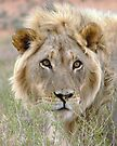 King of the Kalahari by Carisma
