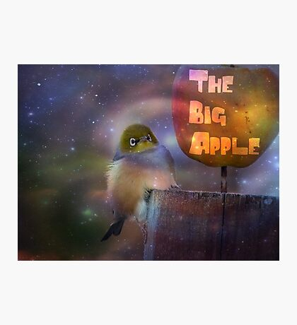 The Big Apple - Silvereye - NZ Photographic Print
