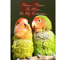 Please.. Please.. Be Mine, Be My Valentine - Love Birds - NZ Photographic Print