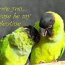 I Love You.. Please Be My Valentine.. - Nanday Conures - NZ by AndreaEL