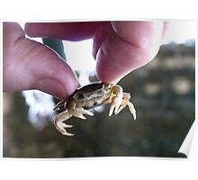 Crab Fingers! - Crab - NZ Poster