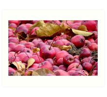 Fallen Crab-apples - Gore Southland NZ Art Print