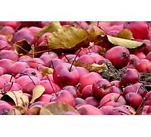 Fallen Crab-apples - Gore Southland NZ Photographic Print