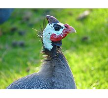 This Mask Is A Disguise!! - Guineafowl - NZ Photographic Print