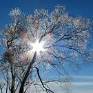Fairy Dust - Tree Coated In Hoar Frost - Gore NZ by AndreaEL