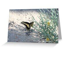 Desert Swallowtail, Mojave Preserve Greeting Card