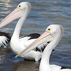 Pelicans in Australia by Lov34music