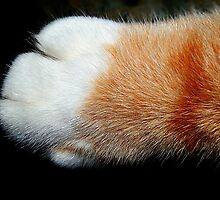 The Paw by Kristie Theobald