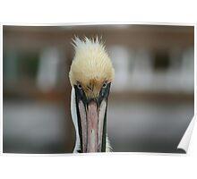 Pelikan Paintbrush Poster