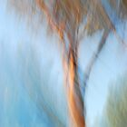 Gumtree at sunset by rainbowimages