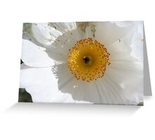 Prickly poppy Greeting Card