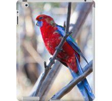 oz birds - crimson rosella iPad Case/Skin