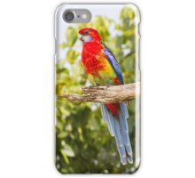 the eastern rosella iPhone Case/Skin