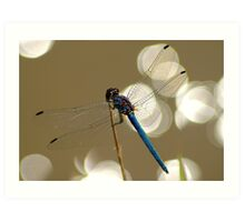 Sparkling dragonfly Art Print