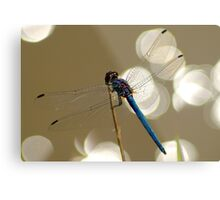 Sparkling dragonfly Metal Print