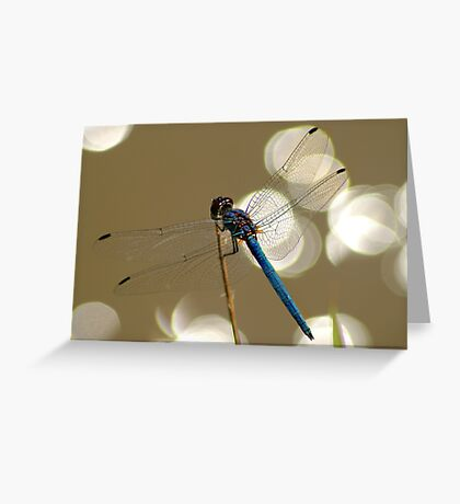 Sparkling dragonfly Greeting Card