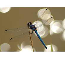 Sparkling dragonfly Photographic Print