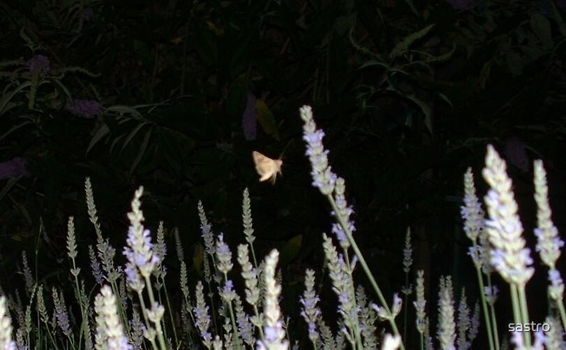 Lavender Lover by sastro