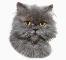 Persian cat by JudyBJ