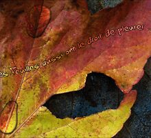 Les feuilles... by Henrykiki
