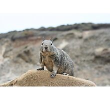 California ground squirrel Photographic Print