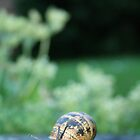 Snail by Chris Wood