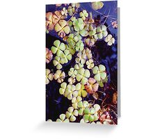 Lake plant Greeting Card