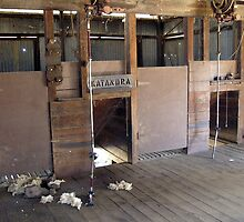In the Shearing Shed  by Frewsellet