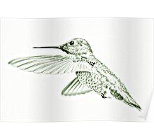"Humming Bird ""Sketch"" Green Poster"