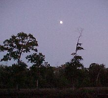 Blue Moon over Sour Lake TX by richardredhawk
