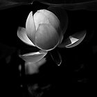 Lotus #105 by Janos Sison