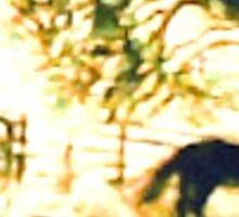 SUNRISE HORSE - Cowboy Country Sticker