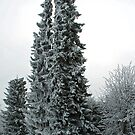 Snow in the garden by Arie Koene