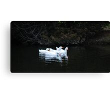 silly Geese Canvas Print